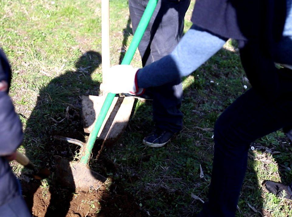 Bambino che pianta albero nella giornata nazionale dell'albero