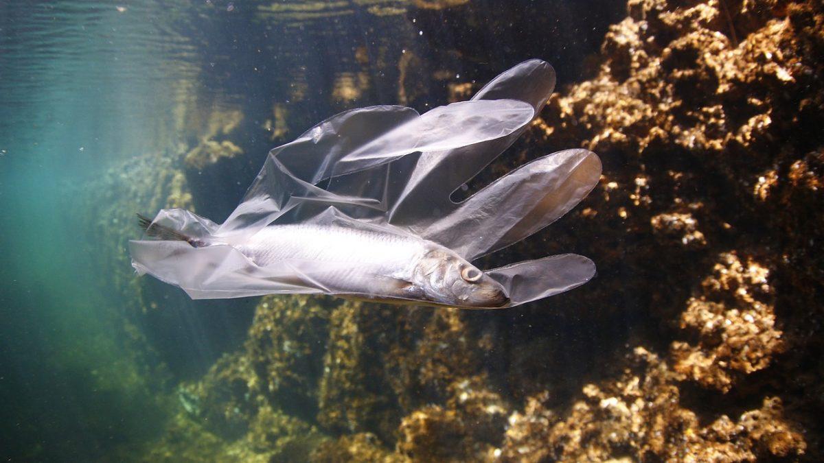 Plastica in mare #plasticfree #iosonomare